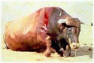 Animal asesinado
